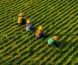 2020 Year-End Message and Overall Outlook for the Agriculture Sector in the Philippines and Southeast Asia for Smarter 2021