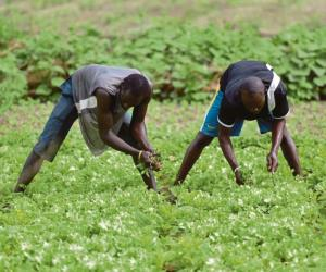 A boost to food security