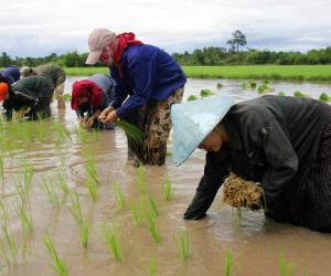 Why agriculture investment in Lao is lacking