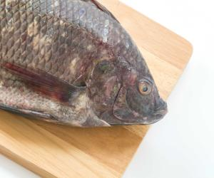 Better, cheaper than chicken: Fisheries research group develops new strain of tilapia