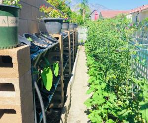 A patio garden grows vegetables on the west coast
