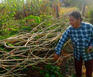 Agricultural diversification: Empowering women in Cambodia with 'wild gardens'