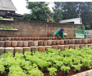 Urban farming a solution to food security issues during pandemic
