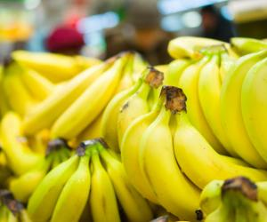 Sabah can become net exporter of Cavendish bananas, says state agriculture minister
