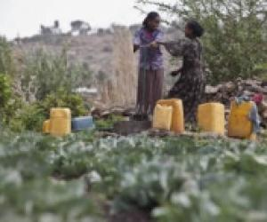 FAO Director-General urges countries to recognize the vital role of rural women in freeing the world from hunger and poverty