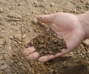 Increased soil contamination threatens food security, warns FAO